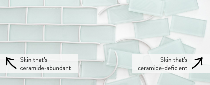 Ceramides are the fundamental building blocks of healthy skin.